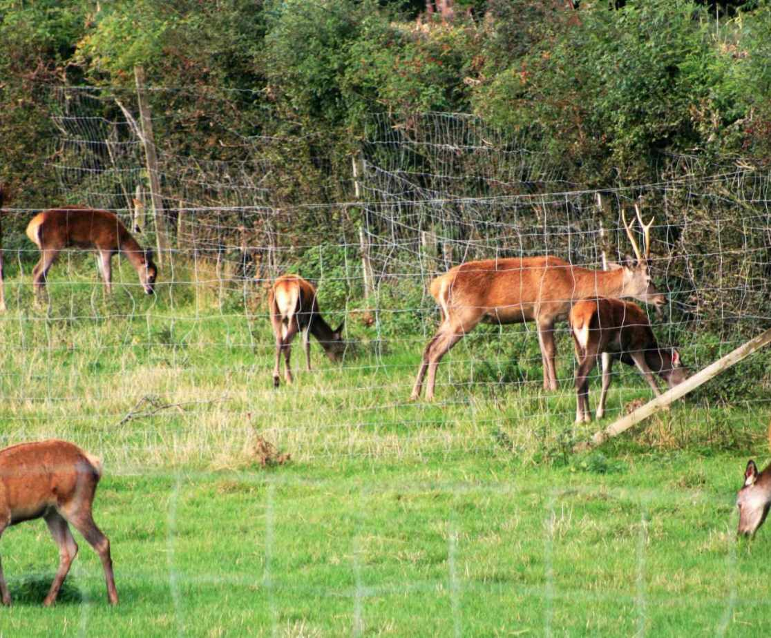 Scottish Deer Centre in Cupar