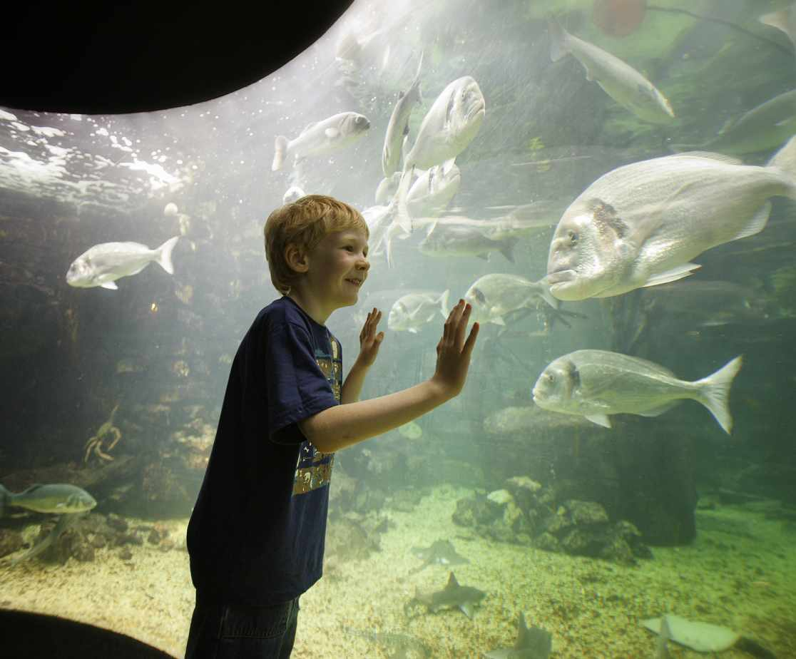 Anglesey Sea Zoo - one of many attractions on the Island