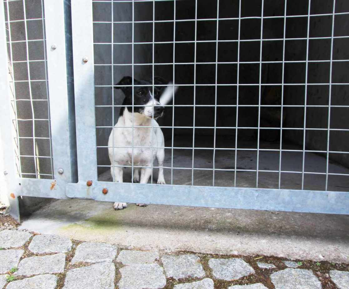 Kennels are on-site for any four legged friends if required