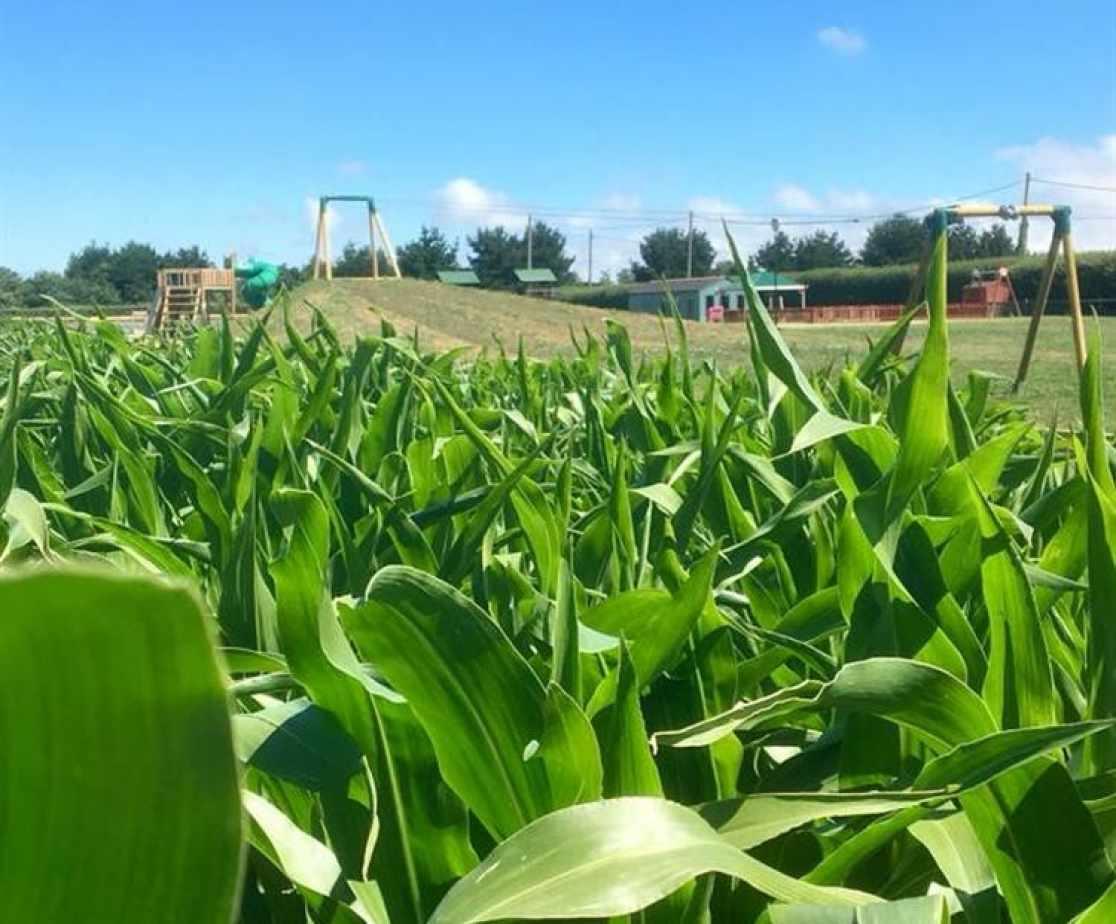 Maize maze_image_1