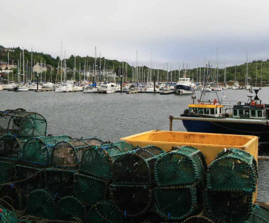 Check on the \'catch of the day\' at Tarbert