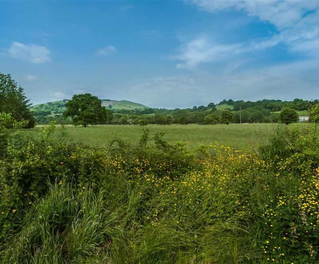 Cynghordy Garden-4532