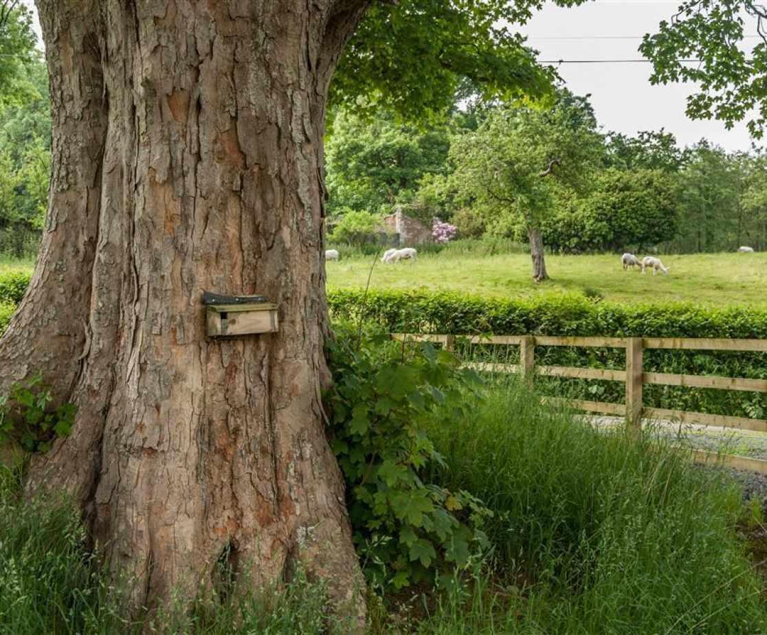 Cynghordy Garden-4541