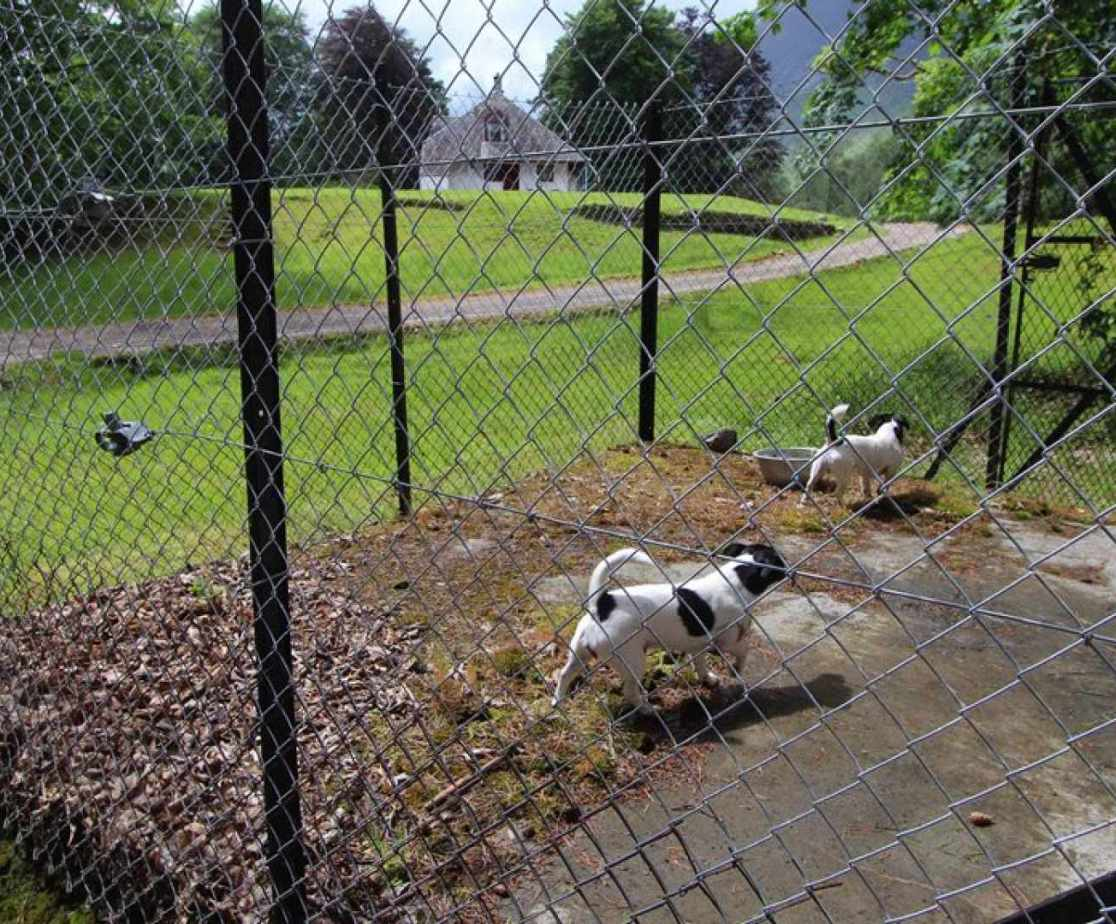 A kennel is available for 2 dogs beside the house