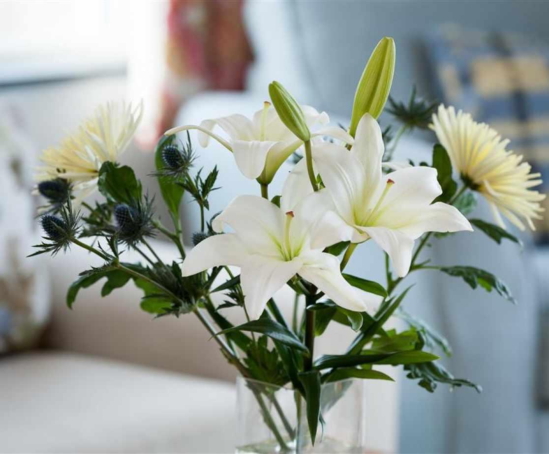 GILCOE - Flowers